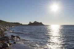 Dogs at Buzzard's Bay (biesterd11) Tags: falmouth capecod cape cod massachusetts ma buzzard buzzards bay sunset sun peninsula water dog dogs puppy beach