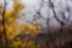 1/365 - Autumn's here (Inelund) Tags: 365project 365days 365 nature dof colors autumn fall norway plant forest woods photography canoneos5dmarkii canonphotography