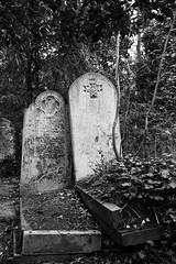 (Josieroo13) Tags: secrettaphophile gravestone graveyard gravemarker grave graves death lifeanddeath beautyindecay ivy naturealwayswins serene calm peaceful cemetery abneyparkcemetery magnificent7 londoncemeteries londonsdead london victorian victorianburial burial burials blackandwhite monochrome
