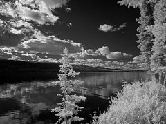 Infrared Day at Big Fox Lake - IR 830nm (MIKOFOX  Show Your EXIF!) Tags: canada infrared bigfoxlake infraredconversion yukon lake water mikofox panasoniclumixgx1 830nm spruce fullspectrumconversion gx1 hills august showyourexif summer clouds lumixgvario1445f3556