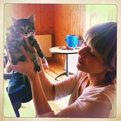 Kattital. (kapitalpunkturis) Tags: cat sumarbústaður köttur kettlingar annarakel kósí