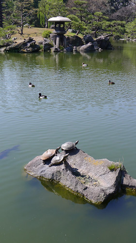 Tokyo Turtles, by Reed A. George