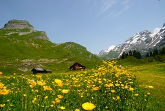 Engelberg - Titlis (Werner_B) Tags: flowers blue summer alps green nature berg landscape schweiz switzerland europa sommer natur wiese sunny blumen hike berge grn alpen blau sonnig landschaft ferien wandern engelberg     titlis turist    alpenblumen  bergtour     europo