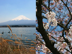 mount fuji - japan (Emmanuel Catteau photography) Tags: travel mountain lake snow tree heritage tourism beauty japan cherry volcano tokyo holidays asia fuji photographer fishermen symbol blossom reporter scenic peak traveller mount holy national journey planet april conde lonely geo geographic nast catteau wwwemmanuelcatteaucom