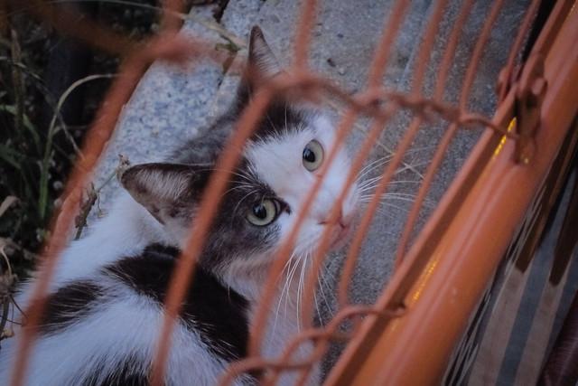 Today's Cat@2012-05-31