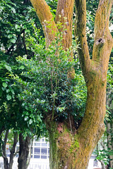 IMG_3345 (jaglazier) Tags: trees june gardens cities taiwan parks taipei daanforestpark urbanism 2012 daan deciduoustrees 6112 copyright2012jamesaglazier