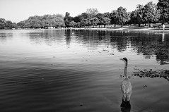 Hyde Park, London (E_O_S) Tags: uklondon