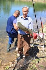 Ctenopharyngodon idella (Amur) (Gianpiero Bozza) Tags: pesca riccia ctenopharyngodonidella