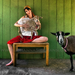 farmer's daughter (tanguera75) Tags: portrait pet green barn sheep farm lamb ewe photobomb