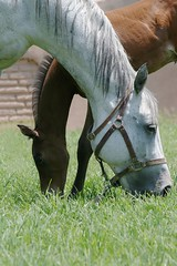 Free Grazing (aylads) Tags: summer horse pet baby black nature animal fur appaloosa mare desert outdoor farm wildlife mother creature colt stallion mane corral filly gelding diamondclassphotographer betterthangood pfosilver