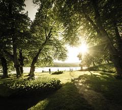 Sunset Of Admiration // (Auensen) Tags: trees sunset summer people sun man green nature sunshine june norway season nikon scenery shine awesome sigma grand norwegian epic perfection 2012 816mm d7000 nikond7000 sigma816mmf4556 sunsetofadmiration