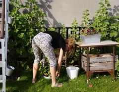 Gardening (os♥to) Tags: woman denmark europa europe sony zealand tina dslr scandinavia danmark a300 sjælland デンマーク osto alpha300 os♥to june2012