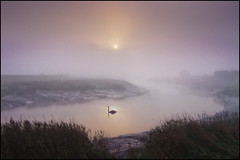 Winters mists (adrians_art) Tags: winter mist water birds fog sunrise reflections bravo silhouettes rivers muteswans