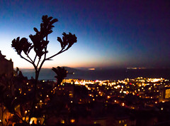 Kangaroo Paws in the City (JohnMinSF) Tags: sanfrancisco silhouette bay alcatraz kangaroopaws