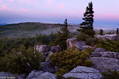 Daybreak on Bear Rocks, Dolly Sods Wilderness (Deb Snelson) Tags: sunrise westvirginia canaanvalley appalachianmountains yeehaw alleghenymountains tuckercounty dollysodswilderness