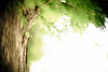 Wind Passage (moaan) Tags: life leica summer digital 50mm woods dof wind bokeh july f10 utata noctilux breeze metasequoia 2012 m9 summerbreeze inlife rustlings leicanoctilux50mmf10 leicam9