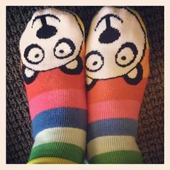 Panda socks (cindyli) Tags: square sierra squareformat iphoneography instagramapp uploaded:by=instagram foursquare:venue=4b144582f964a5204aa023e3 puppisksdfjsdlfjsdlsdjlfksdjlfds