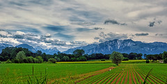 IMG_0338 (pinktigger) Tags: country countryside field storks herons mountains sky clouds landscape fagagna feagne friuli italy italia