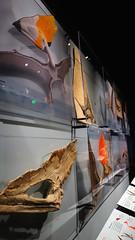 Penachos 03020 (Omar Omar) Tags: pterosaurs pterosaurios ptrosaures flugsaroj flyingdinosaurs dinosauriosvoladores flugantedinosaroj dinosauresvolants lagartosvoladores nhm naturalhistorymuseum museodehistorianatural muse museo museum losangeles losngeles losangelesca losngelescalifornia la california californie usa usofa dscrx100 sonydscrx100 rx100 cybershotrx100 fsil petrificado