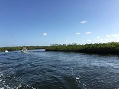 Mangroves (MyFWCmedia) Tags: mangrove water fwc myfwc myfwccom wildlife florida floridafishandwildlife conservation johnpennekamp keylargo flkeys floridakeys floridastateparks johnpennekampcoralreefstatepark park pennekamp lovefl