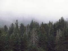 Misty Mountain (Marc Rodriguez 24) Tags: forest misty mountain fog landscape woods flagstaff arizona humphreyspeak clouds