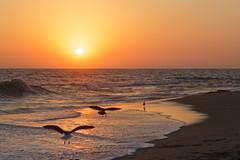 B03A3361_DxO (Estebahn De Peschruse) Tags: usa california newportbeach latour ocean sunset seagull travel canon5dmarkiii