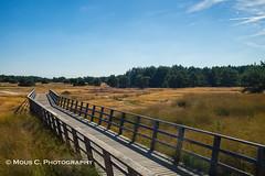 DSC06087.jpg (ChrMous) Tags: landschap veluwe tamronsp2470mmf28divcusd heide sonyslta99 landschapvzw nationaalparkhogeveluwe nederland landscape