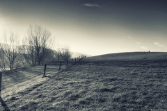 Walking in the Light (Kevin_Jeffries) Tags: light nature hill fencepost tree nikon jeffries d90 soft shadows sunlight new outdoor landscape field sky grass grassland plant monotone hff