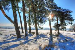 Kalte Wintersonne (oblakkurt) Tags: sonnenstimmung winter schnee