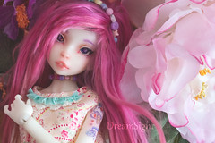 Smell like Sping  (DreamSight) Tags: flower nobledoll asella raspberru raspberry snowwhite wimukt msd french