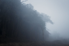(Tc photography.Per) Tags: landscape paisaje mist neblina fog mistery atmosphere tcphotography land branches trees naturallight nature naturaleza weather clima