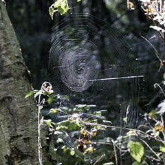 Light Catcher (me'nthedogs) Tags: spider web canadafarm somerset levels light