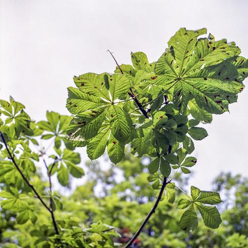 Summer branches - part 5