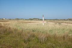 Atriplici-Elytrigietum pungentis (Rense Haveman) Tags: vlieland vliehors armerionmaritimae atriplicielytrigietumpungentis astereteatripolii saltmarsh coastallandscape coast vegetation salinevegetation