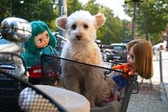 three cute dolls in a basket (Miema) Tags: miema miemadollhouse berlin blythe coco dog puppy cute doll takaratomy