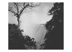 Victoria Falls (inthestride) Tags: livingstone zambia vic victoria falls waterfall water landscape tree mist bw flscher inthestride monochrome outdoor serene