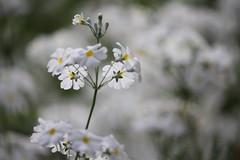 IMG_1706S (__amit__) Tags: royalbotanicgardens sydney australia flowers