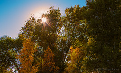 Sunshine and Trees 3 (joneskevin556) Tags: fall colors tress sun idaho grass