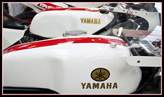 Yamaha - I'll take a red and white one, please.... (davekpcv) Tags: yamaha ypvs 350 racer red white logo tuningforks tank fuel gas tz 250 tzr 350yamaha motorcycle twostroke tzyamaha