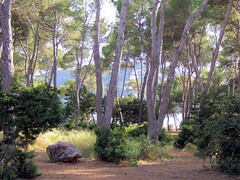 Path to Adventure (Speed of Light [2]) Tags: trees nature landscape spain scenery mediterranean view scenic ibiza coastal vista footpath mirador pineforest santaeulaliadelrio pitiusicislands
