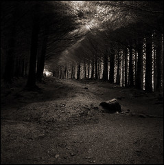 dark passage (stormiticus) Tags: trees blackandwhite bw rolleiflex scotland highlands woods isleofskye kodak scottish pines rodinal tmax100 softlight tmx oldmanofstorr thestorr 28e autaut