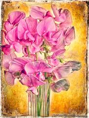 Sweet pea (GAPHIKER) Tags: pink detail art texture paint sweetpea lenabemanna