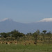 Kili and kongoni salt lick