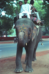 Elephant Bus Service Tees January Marg Janpath Road Area Motilal Nehru Marg Area New Delhi 110011 India Feb 1990 109 (photographer695) Tags: india elephant bus service tees january marg janpath road area motilal nehru new delhi 110011 feb 1990