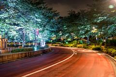 Summer Night Walking (Ballet Lausanne) Tags: night tokyo midtown  roppongi d800 tokyo