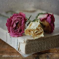.. flowers and book .. (Kerstin Frank art) Tags: indoor flowers roses garden book stilllife texture kerstinfrankart