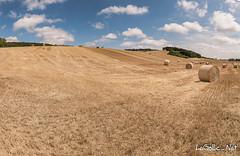 Chteauneuf-Val-de-Bargis - France (vlegallic) Tags: chteauneufvaldebargis france bourgogne nivre champs t paysage panorama nikon nikond610 d610 tamron tamronsp2470mmf28divcusd tamron2470