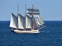 Vega Gamleby (42jph) Tags: nikon d7200 sigma 150500 uk england northumberland tall ships 2016 boat sea ocean water sail
