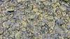 Beach Rock Texture. Great Neck, Ipswich, MA. (dckellyphoto) Tags: rocks stones algae muddy beach shore texture closeup ipswichma ipswichmassachusetts massachusetts ipswich greatneck littleneck slippery ocean bay water watery newengland