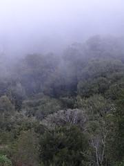 """Pluviselva de tipo valdiviana en la Cordillera de la Costa, región de Los Ríos """"Mahuidanche""""?."""